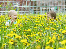 Portrait of two little boys together sitting in dandelion field Stock Image