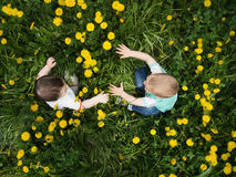 Portrait of two little boys together sitting in dandelion field. Outdoor Stock Image