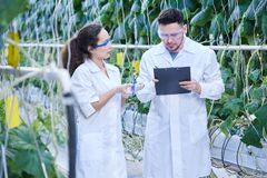 Two Agricultural Engineers in Plantation. Portrait of two modern scientists studying quality of vegetables in greenhouse of agricultural plantation Stock Photo