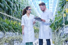 Scientist on Modern Plantation. Portrait of two modern scientists studying selection of vegetables in greenhouse of agricultural plantation Stock Photos