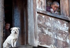 Portrait of two tibetan boys with white dog Royalty Free Stock Image