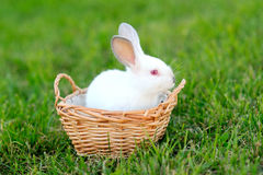 Portrait of two young rabbits Royalty Free Stock Images