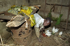 Portrait of Ugandan boy that takes care of chicks. Uganda, Luweero district, village Kalasa: a child, boy, give in a dark shed his young chickens feed and stock image