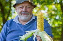 Portrait of Ukrainian farmer showing quality of his maize harvest Royalty Free Stock Photo