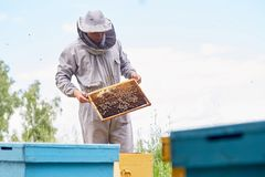 Young Apiarist Checking Hive Frames. Portrait of unrecognizable beekeeper holding honeycomb frame while harvesting honey in apiary, copy space stock images
