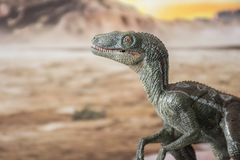 Portrait of a velociraptor in a jurassic world. Ready to attack another dinosaur Royalty Free Stock Image