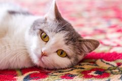 A portrait of a very sad kitten with huge eyes royalty free stock photos