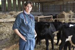 Portrait Of Vet In Barn With Cattle Royalty Free Stock Image