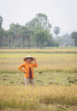 Portrait of Vietnamese farmer working on the rice Stock Image