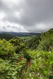 Portrait view of beautiful plant life. Beautiful portrait view of plant life along the edge of the Sete Cidades caldera in Sao Miguel stock photography