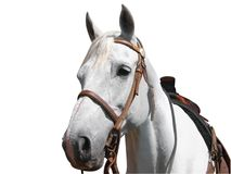 Portrait View of a Cowboy's Horse Royalty Free Stock Photos