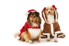 Portrait von zwei Hunden Lizenzfreie Stockfotos