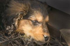 Beautiful sad puppy lying outside stock image