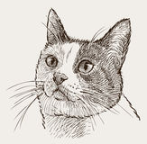 Portrait of a watching cat Royalty Free Stock Images