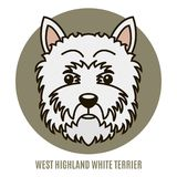 Portrait of West Highland White Terrier Royalty Free Stock Images