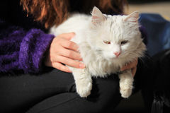 Portrait of white cat Royalty Free Stock Images
