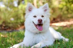Portrait of white dog outdoors