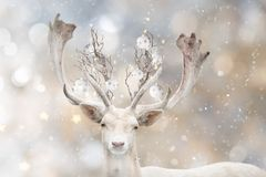 Portrait of white fallow deer with decorative balls. royalty free stock photo