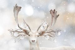 Portrait of white fallow deer with decorative balls. royalty free stock images