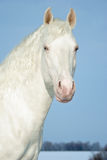 Portrait of a white horse on a background of the dark blue sky Royalty Free Stock Photo