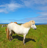 Portrait of a white horse Royalty Free Stock Images