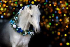 Christmas horse portrait royalty free stock images