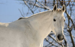 Portrait of white horse in forest Stock Photos