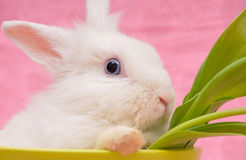 Portrait of white rabbit Stock Photos