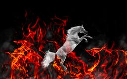 Portrait of white stallion in Fire royalty free stock photo
