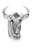 Portrait of widebeest drawn by hand in pencil Royalty Free Stock Photography