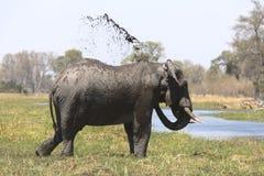 Portrait of wild free bull elephant showering Stock Photos