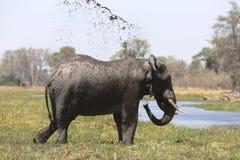 Portrait of wild free bull elephant showering Royalty Free Stock Photography