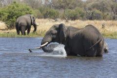 Portrait of wild free elephant showering Stock Image