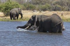 Portrait of wild free elephant showering Stock Photo