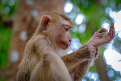 Portrait of wild monkey in forest. Close up view stock photos