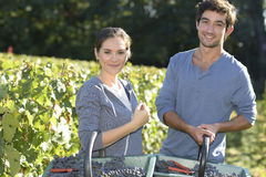Portrait of wine-growers with grapes Stock Photo