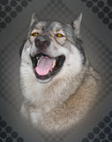 Portrait of wolf. Royalty Free Stock Images