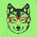 Portrait of Wolf with glasses. Royalty Free Stock Photos