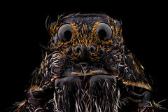 Portrait of a wolf spider. Magnified 10 times. Real life frame width is 2.2mm Stock Photo