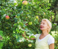 Portrait of a woman collecting apples in garden Royalty Free Stock Images