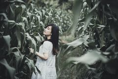 Portrait of woman in corn field Royalty Free Stock Photography