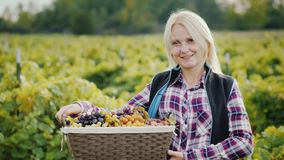 Portrait of a woman farmer with a basket of grapes. Looking at camera stock photography