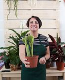 Portrait of woman florist with cactus in apron and tool in flower shop. Woman florist with cactus in apron and tool in flower shop royalty free stock photography
