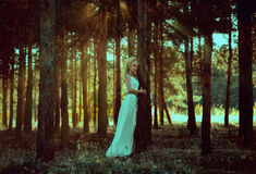 Portrait woman in forest Stock Photography