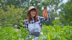 Portrait woman with organic carrots in a vegetable garden. Gardening Woman with organic carrots in a vegetable garden stock footage