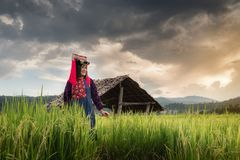 Portrait of Woman Tribal Lisu in Traditional Clothing and Jewelry Costume in Rice Fields., Lifestyle of Hill Tribe Girl in The. North of Thailand.,Cultural royalty free stock images