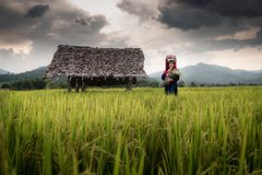 Portrait of Woman Tribal Lisu in Traditional Clothing and Jewelry Costume in Rice Fields., Lifestyle of Hill Tribe Girl in The. North of Thailand., Asian Ethics royalty free stock image