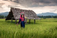 Portrait of Woman Tribal Lisu in Traditional Dress and Jewelry Costume in Rice Fields., Lifestyle of Hill Tribe Girl in The North. Of Thailand.,Cultural Outdoor royalty free stock photography