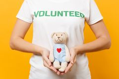 Portrait of woman in white t-shirt with written inscription green title volunteer hold teddy bear plush toy isolated on. Yellow background. Voluntary free royalty free stock image