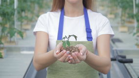 Portrait of a woman who in her hands stretches the soil with a plant. stock video